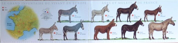 La Boutique de l'Âne. Recto carte postale des races ânes et mulets: lambertane.free.fr/page34-34.htm